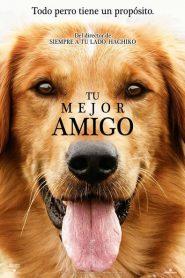 A Dog's Purpose (Tu mejor amigo)
